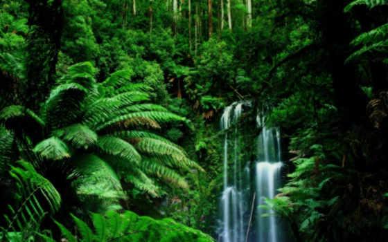 тропических, zhivotnye, лесов