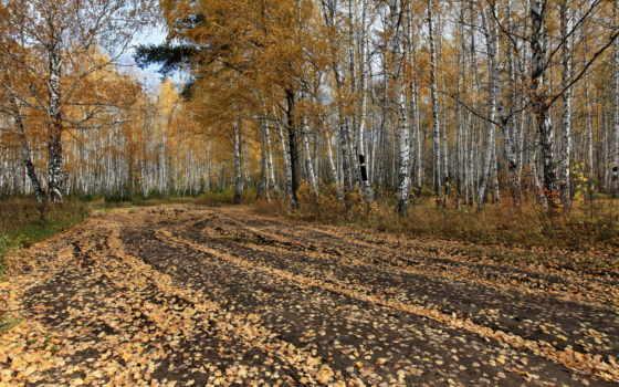 осень, деревя, рисунки