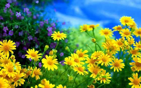 cvety, priroda, leto
