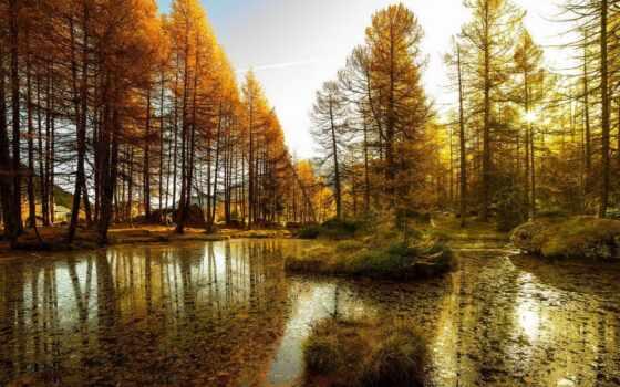 высокого, качества, trees, лес, reservoir, природа, feltrer, озеро, роберт, украшения,
