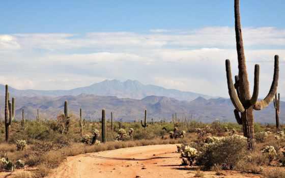 пустыня, кактусы, горы, тепло, картинка,