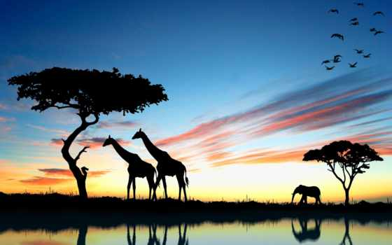 закат, африка, жираф, слон, сафари,