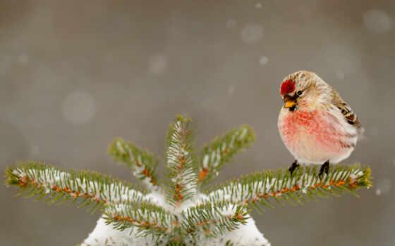 winter, christmas, снег, дерево, природа, sneeuw, клюв, dieren,