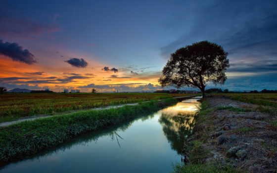 дерево, природа, oblaka