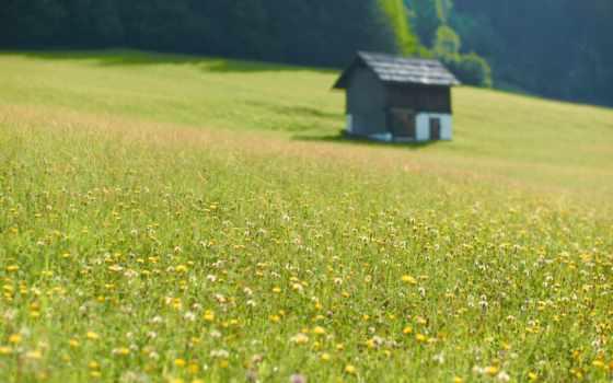 campo, flores, prado, casa, imágenes, desktop, fondos, телефон, изба, fountain,