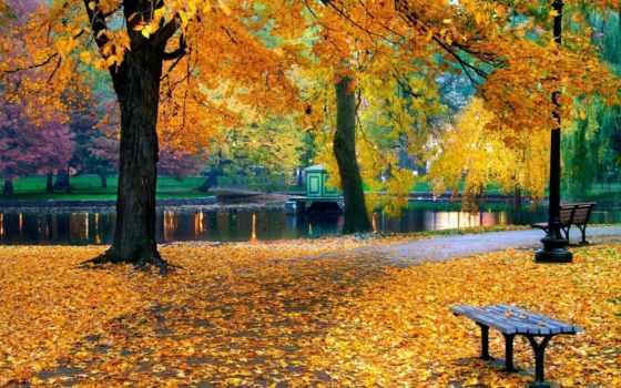 осень, park, парке, пруд, trees, природа, за, листва,