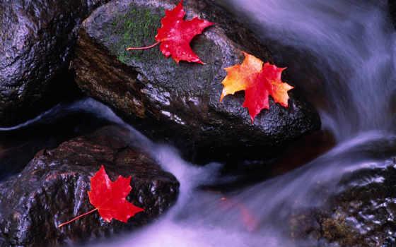 канада, windows, rivers, desktop, природа,