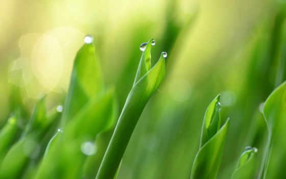 капли, роса, макро, росы, листва, devushki, красивые, зелёный, каплями,