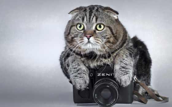 кот, фотоаппарат, залез, summit, зенит, zhivotnye,