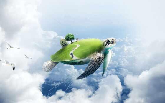 черепаха, скорость, песочница, photoshop