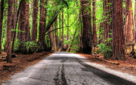 дорога, лес Фон № 9157 разрешение 1920x1200
