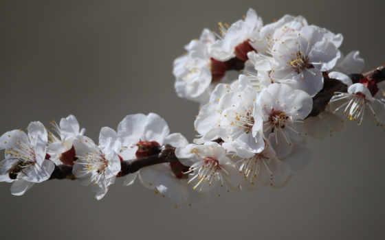 Цветы 37325