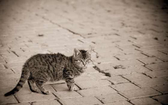 мостовая, улица, кошка