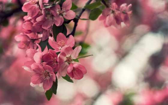 природа, цветы, листья