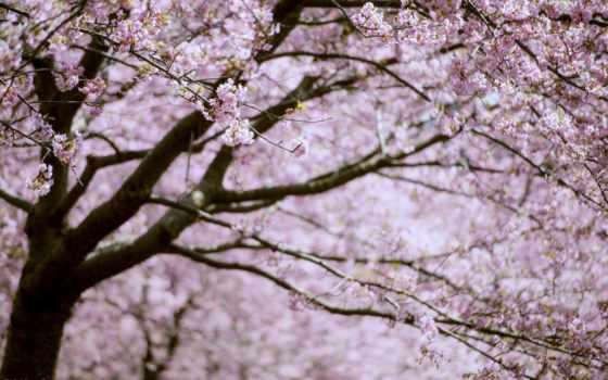 весна, цветы, рассвета