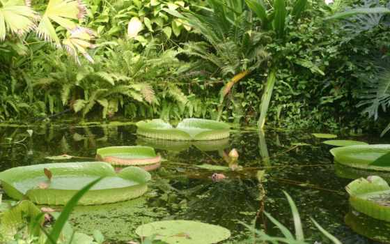 garden, природа, цветы, free, растения, зелёный, уютный, угол,