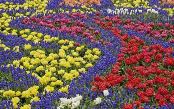 цветы, прикольные, тюльпаны, клумба, букет, весна, мускари, рисунок, картинка, красивые, колокольчики,
