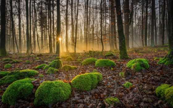 лес, восход, landscape, forests, река, самый, desktop, avatars,