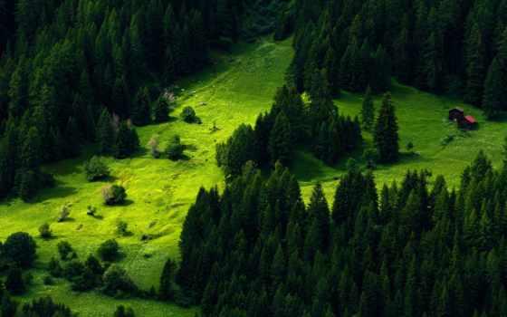 pine, desktop, природа,