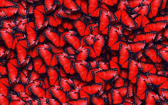 бабочки, красивые, широкоформатные, коллекция, текстура, загружено, лучшая, уже, красные,
