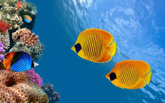 fish, ocean, море