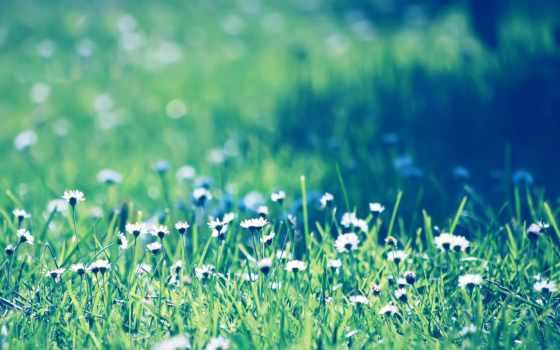 hijau, rumput, iphone, pinterest