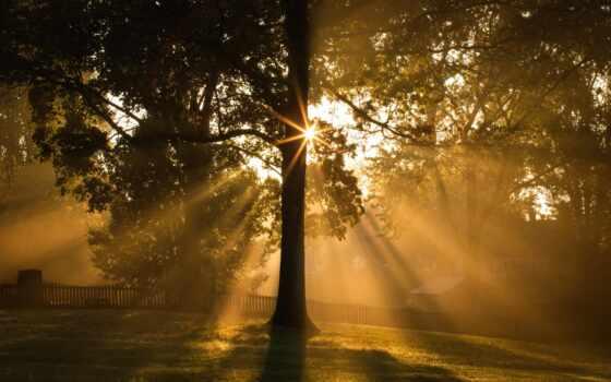 дерево, leaf, branch, утро, свет, sun, mist, even, туман, kwallpaper, осень