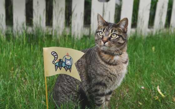 кот, трава, traffic, интересно, animal, другой, free, день