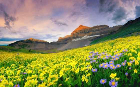 цветы, горы, долина