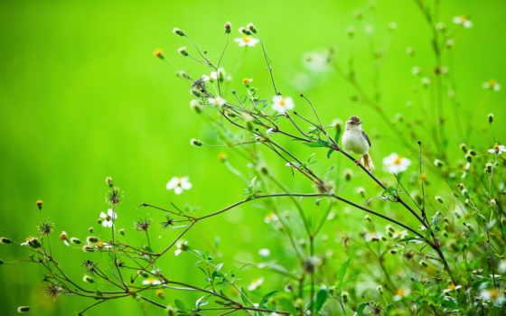 природа, summer, птица