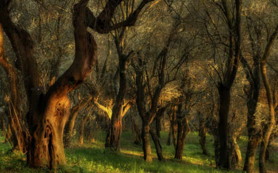 лес, trees, you