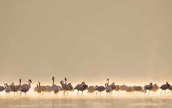 птицы, природа, фламинго, высоком, zhivotnye, summer, birds, качестве, лучах, нояб,