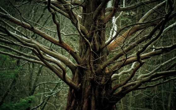 дерево, ветки, природа, большое, высоком, базе, нояб, качестве, trees,