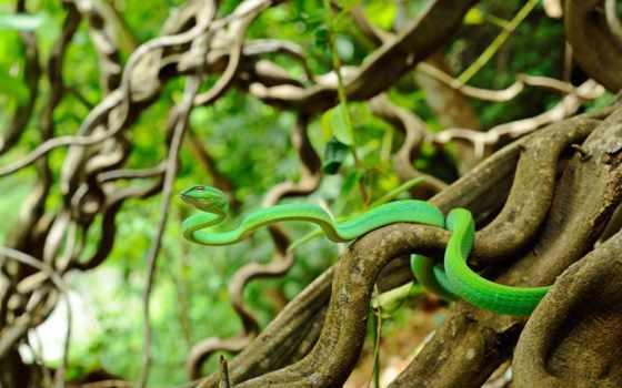 animais, print, orient, snake, cobra, selvagens, дешевые, water,