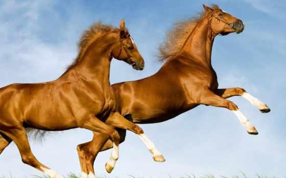 zhivotnye, лошадь, android