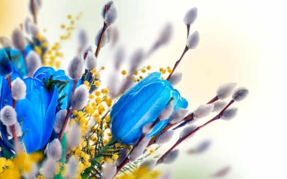 тюльпаны, голубые, мимозы, стоковое, иллюстрации, мимозой, mimosa, многомилионной, коллекции, фотографию, стоковую,