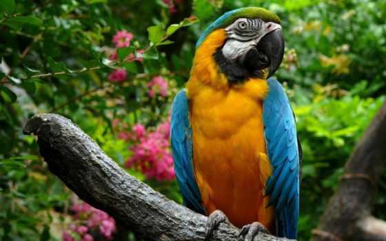 macaw, попугай, попугаи, online, яndex, card, zhivotnye, красавец, сидит, time, решен,