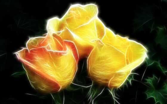 rosas, con, fotos, flores, ramo, imágenes, high,