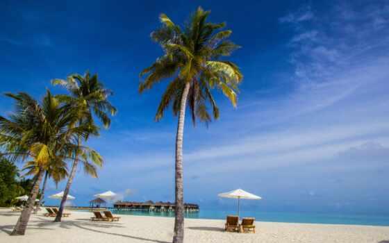 лицо, tropical, tropic, пляж, region, maldives, во, tropicality, песок