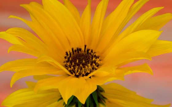 природа, desktop, цветы, you, just, picture, url, flowers, gardens, artfotki, cvety, thank,