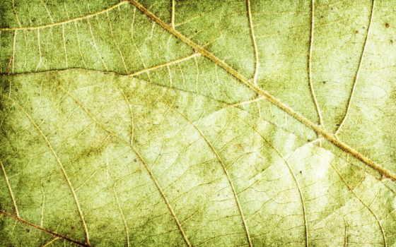 текстура, зелёный