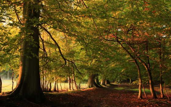 природа, лес, дорога, осень, прекрасными, уголками, природы,