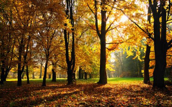 осень, park, листва