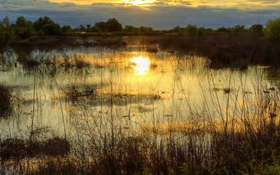 swamp, закат, вечер, озеро, солнца, красивыми, trees, природы, debt, закатами, money,