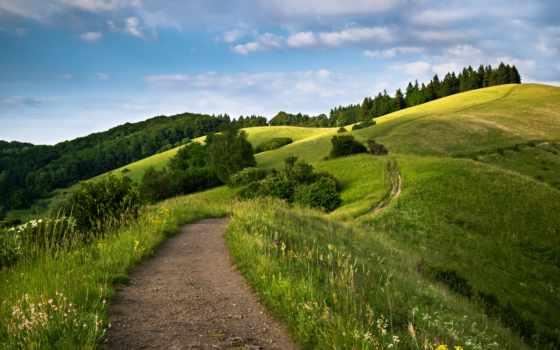 дорога, холмах, trees, холмы, зелёных, cvety, горы, дороги,