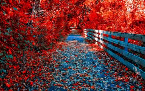 осень, ultra, листья, purple,