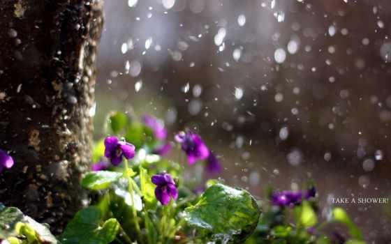 цветы, дождь, природа