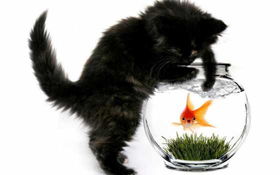 кот, аквариум, fish