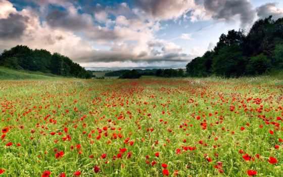 цветы, луг, landscape