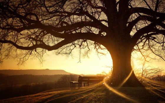 дерево, успокаивающие, природа, компьютера, мб, arukatti, дверь, dilshan, trees, релаксовые,